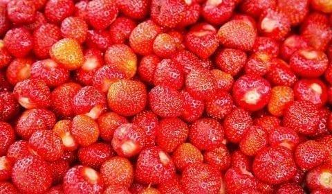 Verse rode aardbeien uit Valldal, vlakbij Gudbrandsjuvet