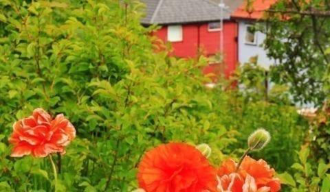 Kleurrijke bloemen in een tuin in Molde met een cruiseboot op de Romsdalsfjord in de achtergrond